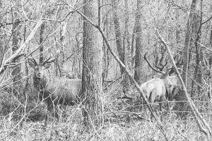 deer wildlife photography wild animal wood wildlife mobilechallenge real deer