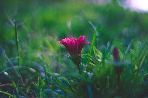 delicate plant field blooming growth garden flower beautiful flora focus
