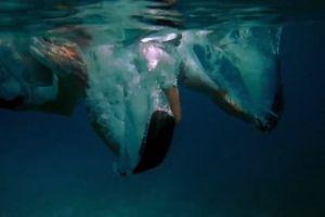 divers diving couple sea corals swimming ocean underwater