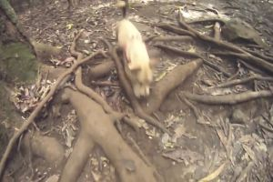 dog nature forest animal branches pet people walking stones trees