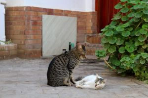 double love nature two cats cats