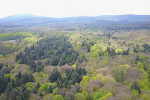 drone footage forest nature scenic woods aerial shot trees conifer