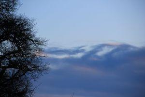 earth meadow die world freedom sky equilibrium bud new tree