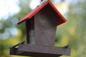 eat bird house animal hanging flight