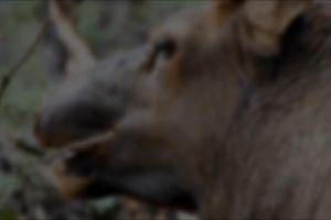 eating animal deer antlers close-up