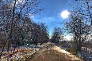 empty street trees road sun glare sun blue sky
