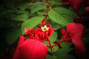 environment floral scene beauty growth nobody garden vivid plant greenery