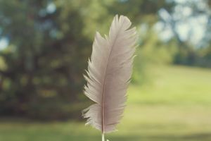 feather blurred background blur