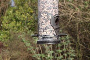 feeder feeds hanging animal daylight