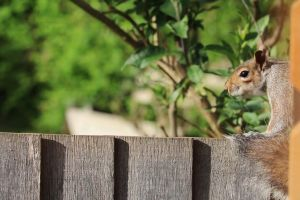 fence daylight escape squirrel. animal plants wood