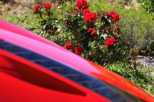 ferrari road red roses fast car motor wheel speed windows cool