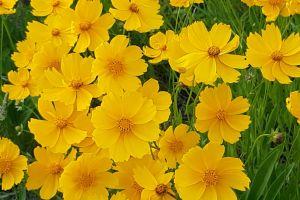 field blossom weather flowers yellow bloom windy season plants close-up
