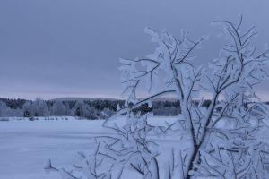 finland frozen tree frozen lake landscape panoramic view tree foreground sun glowing lapland