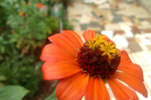 flor red flower flower orange flower