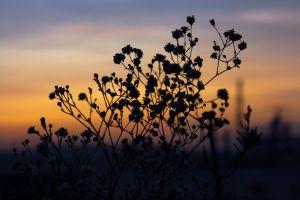 flora flower nature dawn backlit macro