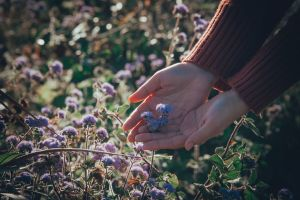 flora plant bloom flowers person hands blossom
