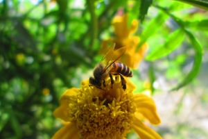 flower bee nectar insect fauna