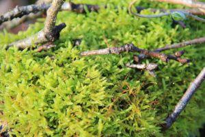 flower bushcraft die traveling foliage birth equilibrium nature puddle earth