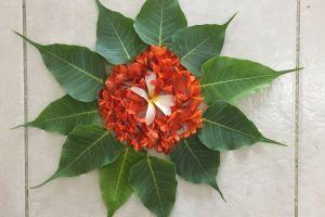flower flower bed onam