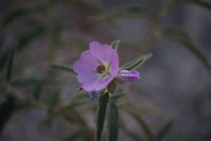 flower macro wild flower purple