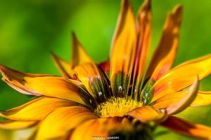 flower natural green yellow macro