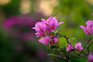 flower nature photography nature beautiful flowers pink flower