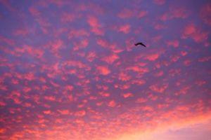 fluffy clouds clouds sunrise sky