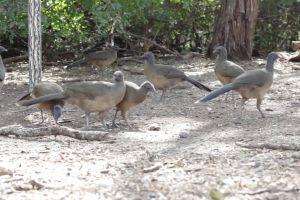 forest animals picking nature ground