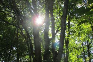 forest trees sun through trees