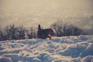 freezing frosty snow snowy canine daytime mammal cold fog frozen