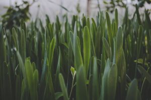 freshness color green plant garden field lawn growth dawn close-up