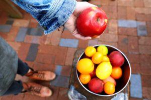 fruits assorted oranges farming person lemons bricks hand healthy grow