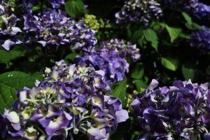 garden nature purple flower