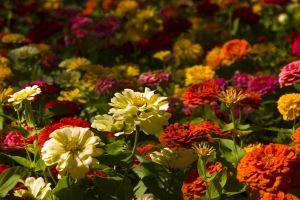 gardens landscape flower nature closeup grass petal bloom garden field