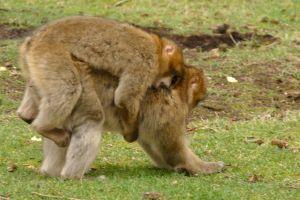 grass animals monkeys primate cute wildlife