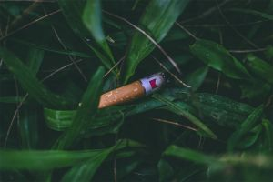 grass cigarette dark green cigar dangerous wildfire