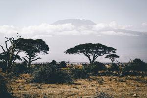 grass clouds serengeti landscape bush photography safari grassland adventure sand
