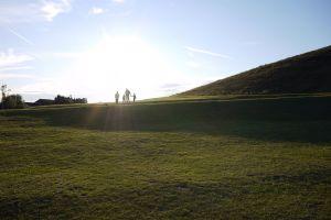 grass family sun sky