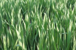 grass field daylight soil green close-up plants