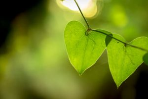 green nature double hearts blurry pair