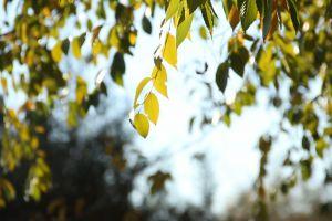 green summer windy sunlight daytime trees