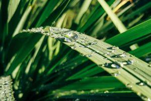 green sunlight close-up raindrops wet depth of field grass garden drops of water light