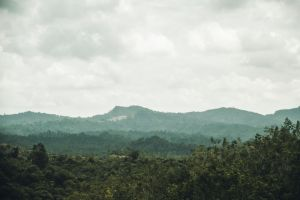 green virgin jungle forest