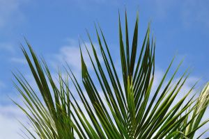 growth foliage close-up plant bright green natural tropical blue sky branch
