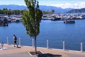 harbor water yachts walking boats daylight watercrafts man marina tree