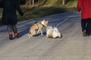 harness meeting january dogs asphalt different races women winter grass walking