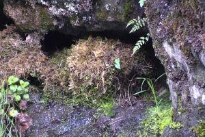 hatchlings animals nature nest