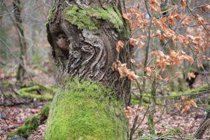 herb earth plant life healing seed die tree branch healthy