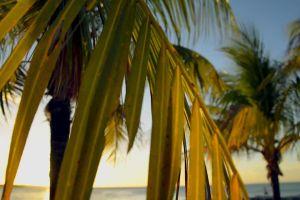 holiday palm trees evening vacation sea sun ocean beach sunset