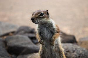 hotel ground lanzarote animal squirrel. animals photo squirrel holiday